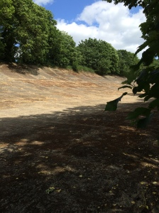 The Brooklands banking in sunshine.